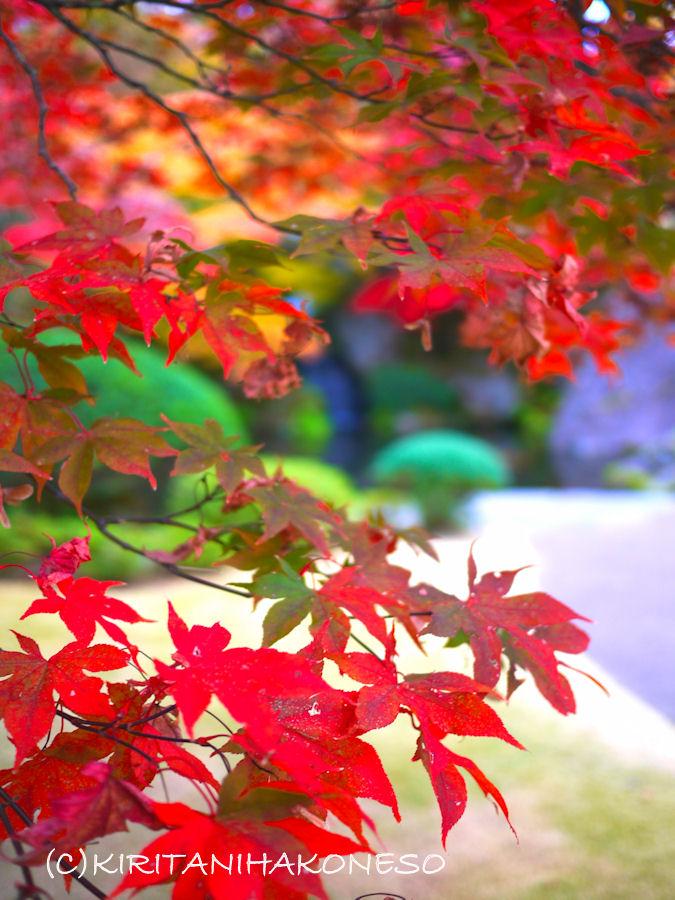 2011年11月16日箱根美術館.jpg