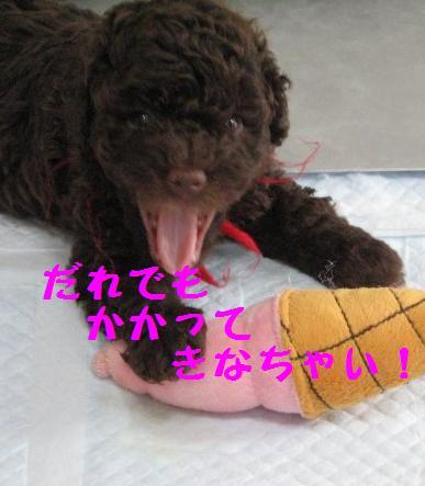 090809_0112.JPG