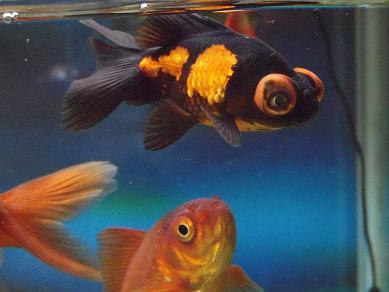 謎の金魚を下から確認