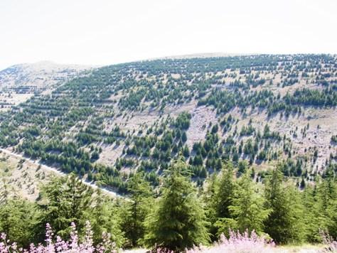 レバノン杉保護区でピクニック