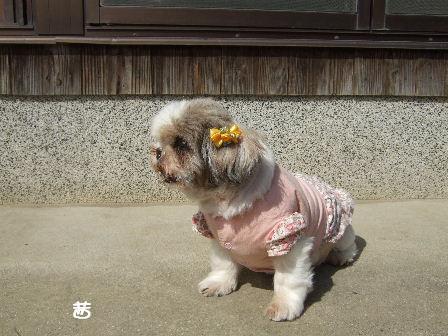 茜 14歳 2009.10.1.JPG