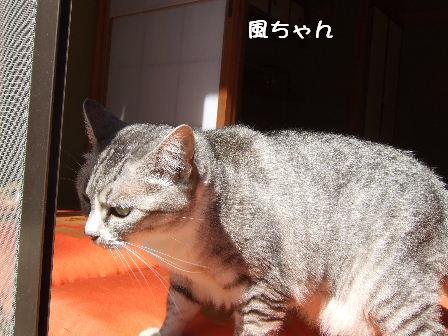 風ちゃん1.JPG