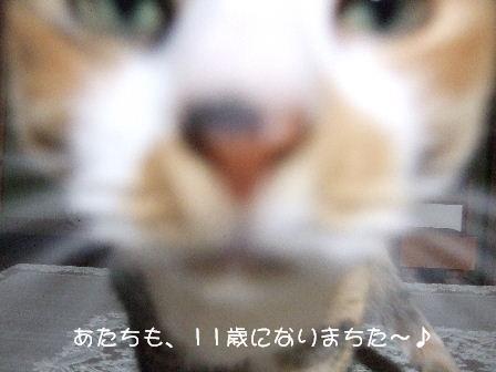 華ちゃん.JPG