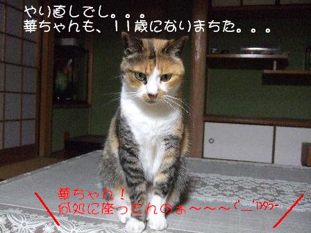 華ちゃん1.JPG