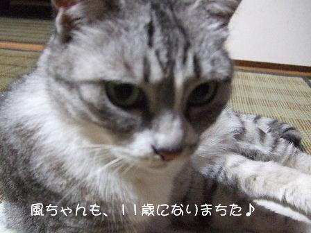風ちゃん3.JPG