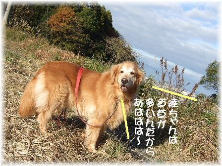 道草.JPG