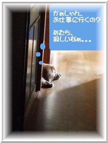 寂しいの.JPG