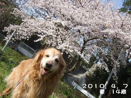 菫14歳2010.4.7.JPG