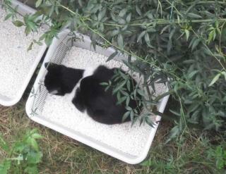 猫はネズミ駆除に効果的?実際に採用している事例