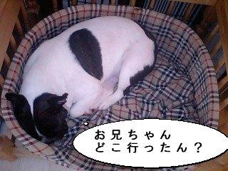 甘えん坊5