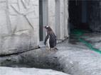 ペンギン君