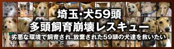 埼玉多頭飼い崩壊