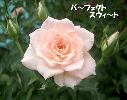 CIMG5768_3.JPG
