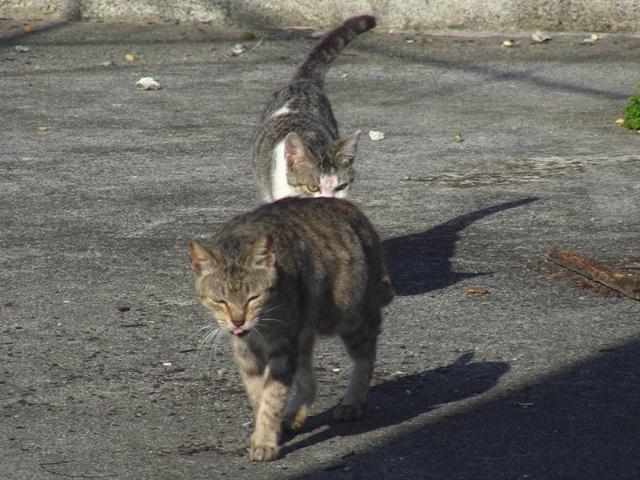 お、こうして見ると、ネコ科の「猛獣」の風格!、ベランダ・なかよし・親子♪、屋上で昼寝の「準備」?