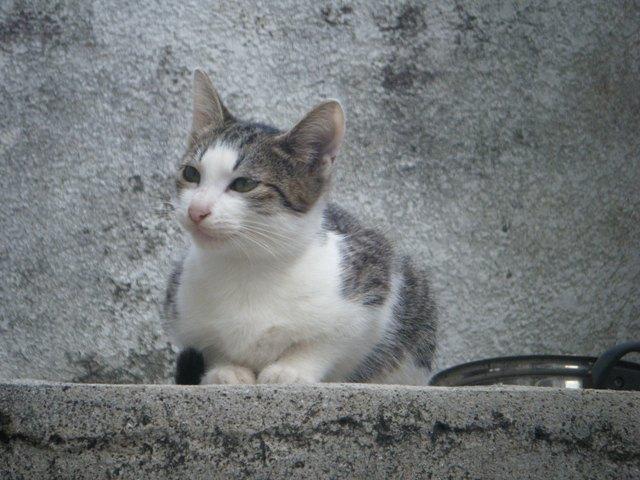 あら、お迎え、してくださったのですか?、入口の階段上、ベランダ・ベィビー♪
