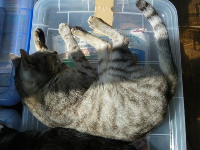 ひだまり。とらちゃん。眠っている「動物」は、こんなに「無防備」に見えて・・・。