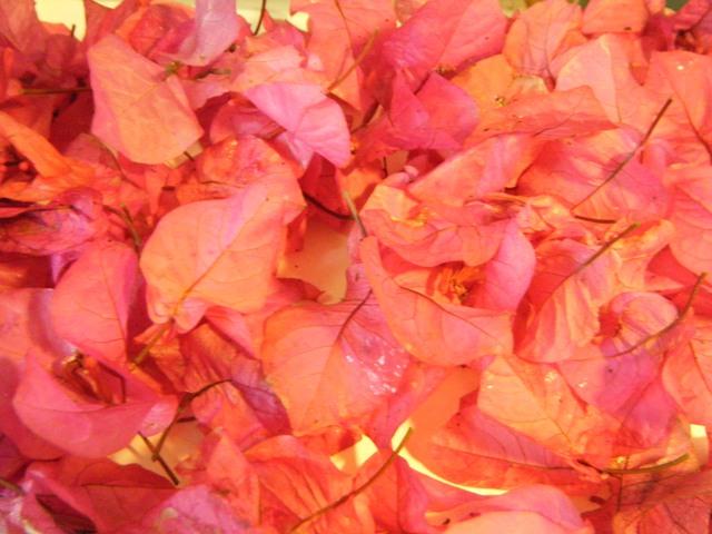 ブーゲンビリア・落花・Vol.4、オーちゃん♪、「お供え」用。強い風が吹いたからか、たくさん見つかった!