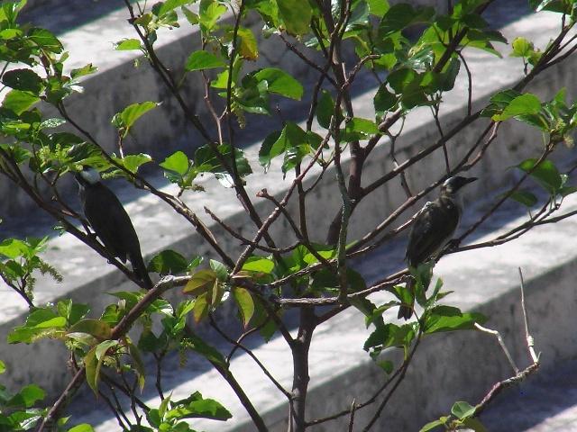 左の方は、頭白いから、「年長者」?、右の方は明らかに「幼鳥」。まだ人も少ない遊水地で、「家族」で巣立ちの「予行演習」。