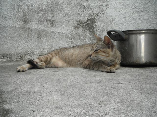 今日も、リラックス・おかあさん♪、日陰のコンクリートの肌触りが、涼しい?