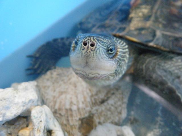 かめお'ズ・ニュー・ハウス♪、気に入ってくれた?、その顔、「満足」?、よくわからん。さすがに「爬虫類」、だからね!