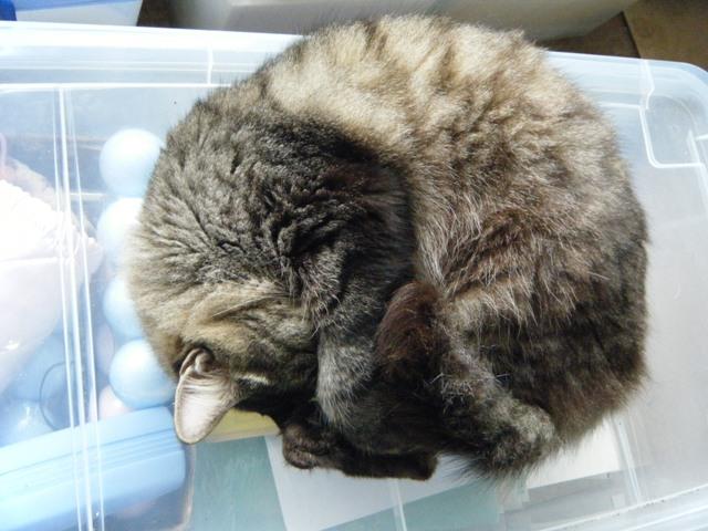 「理由欠乏の原理」?、ほぼ完全な「円形」。さんこぷー。前足で顔を隠して昼寝するの。
