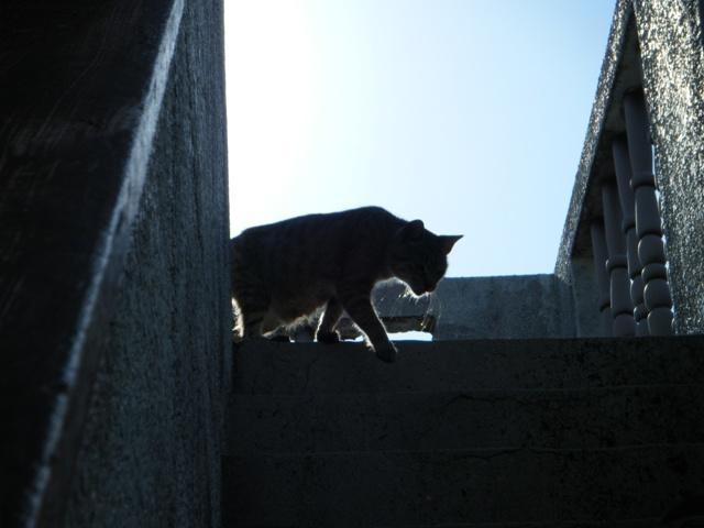 朝日に映えるシルエット(!)、屋上の、ベランダ・ママ♪