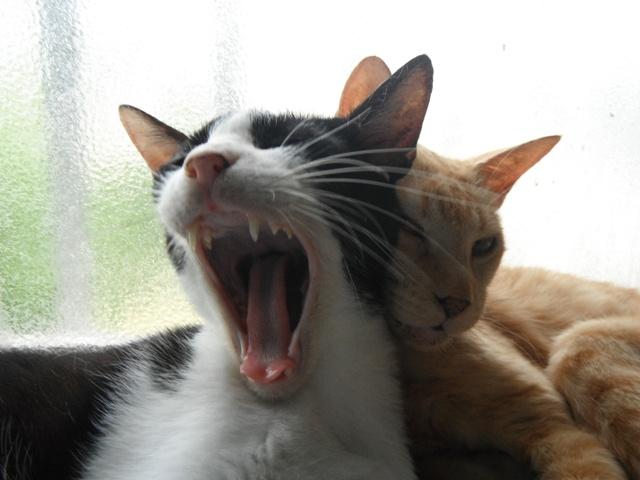 左、テンちゃん♪、と、右、ちー♪、すごいあくび。