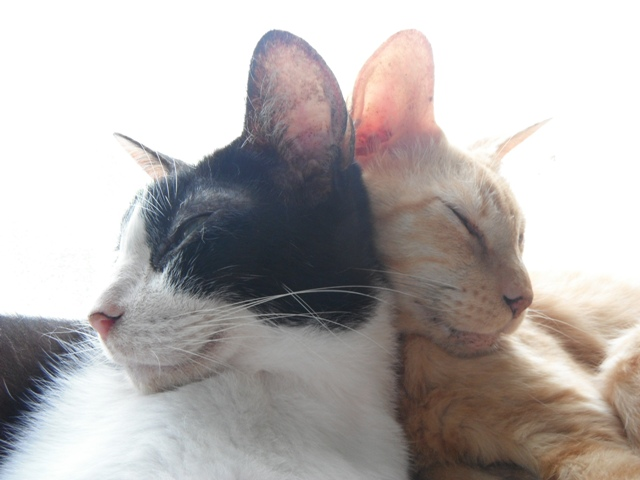 左、テンちゃん♪、と、右、ちー♪、仲がいいのはいいけど器用な格好で寝てますな・・・。