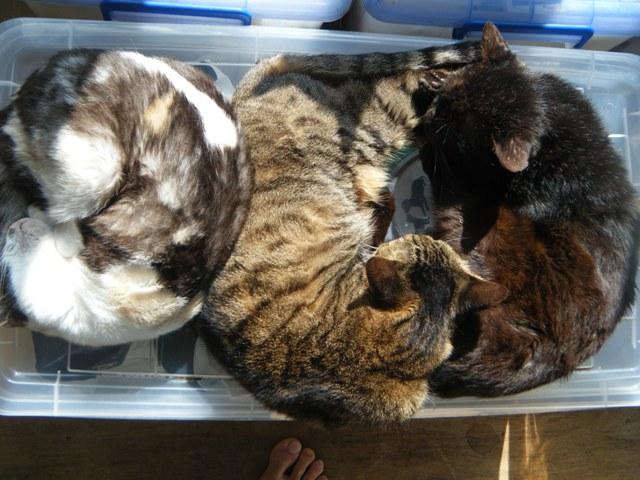 本当に(!)春だ。ひなたぼっこ。左から、エマ、キキ、そして、あれ?、黒猫は区別がつかんぞ?、ぼうや、か?