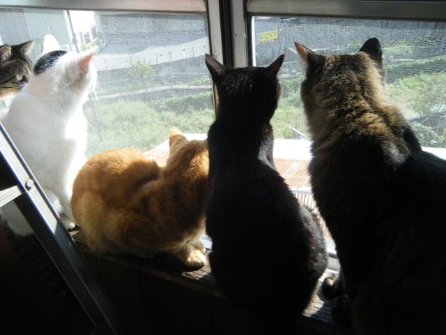 「窓際」族。みんなで外を見て、小鳥でもいるのか?、左から、いちこぷー、チー、ロッシ、さんこぷー。