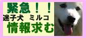 banner_mirco_momohaha.jpg