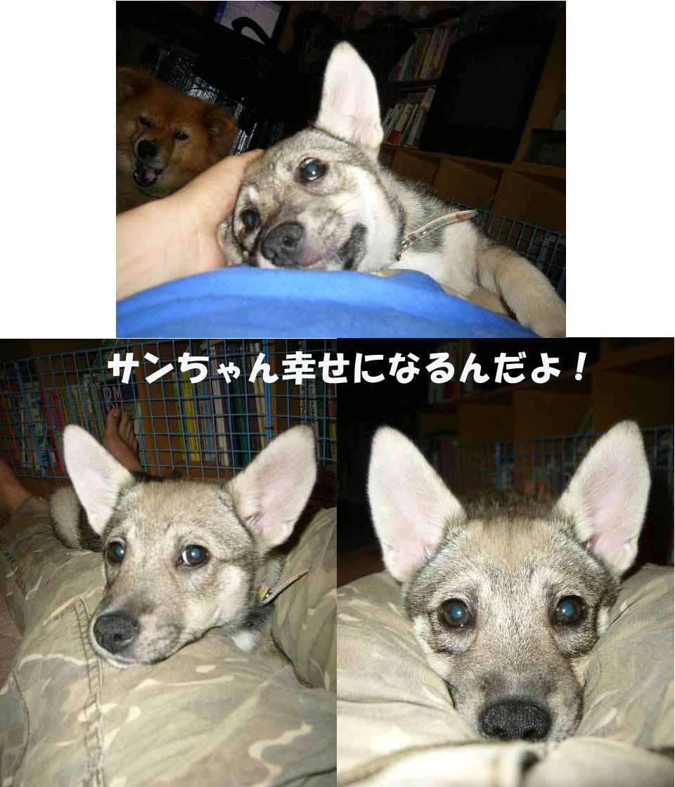 サンちゃん.jpg