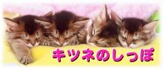 Cattery GURIGURI〜キツネのしっぽ〜