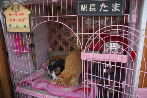 Tama Station Master Cats Home