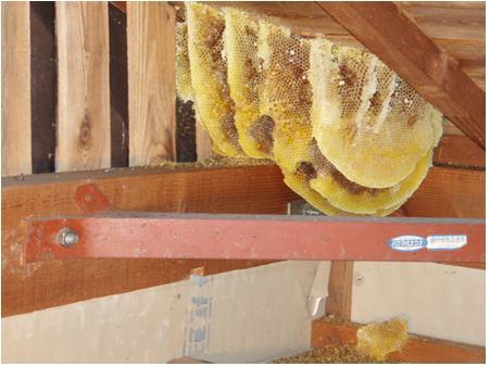 ミツバチ巣.jpg
