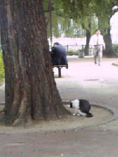 サラリーマンと柳と猫