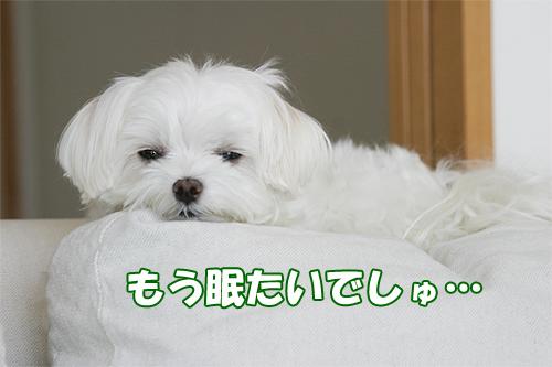 るぅ 眠い 商品撮影時.jpg