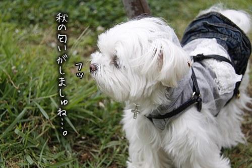 8-27-秋の匂い.jpg