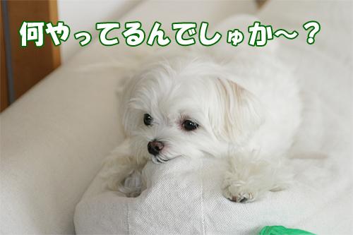 るぅ ソファー上 商品撮影時.jpg