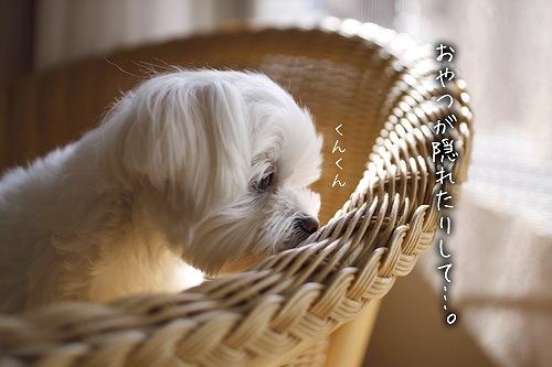 02-02-おやつが隠れてる?.jpg