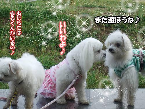 5-29-ビィーくんナナちゃん.jpg