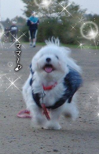 11-27-ママー♪.jpg