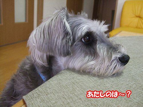 5-14-あたしのは?.jpg