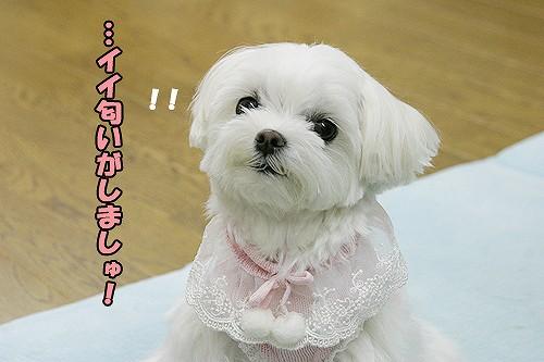 5-15-イイ匂い.jpg