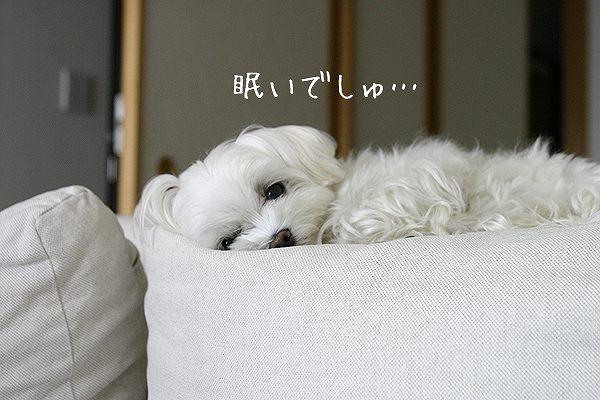6-8-眠いでしゅ.jpg