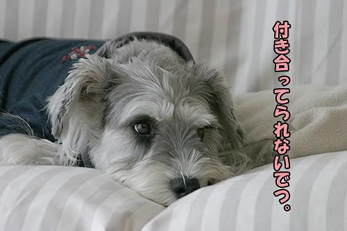 4-14-アクちゃん.jpg