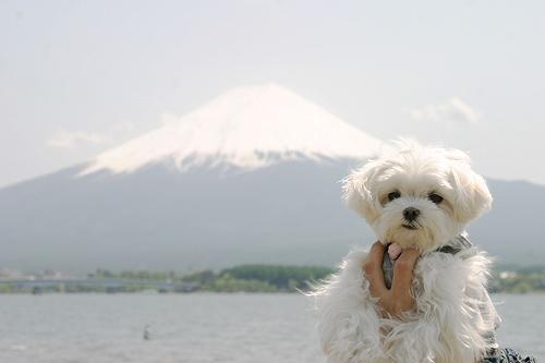 5-12-富士山とるぅ.jpg