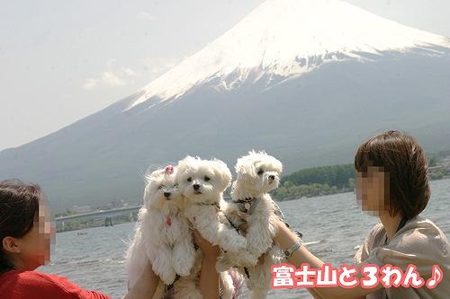 5-11-富士山と3わん.jpg