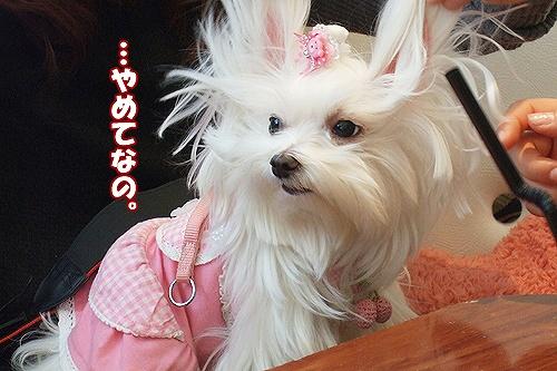 2-24-ラヴ(ウサギ).jpg