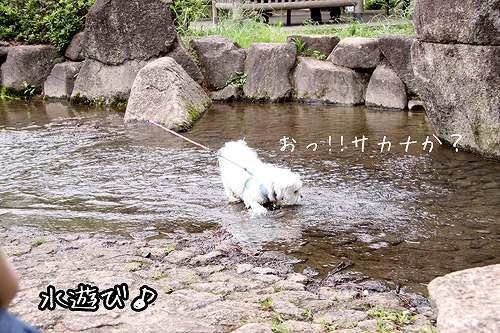 6-23-水遊び1.jpg